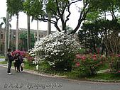 台大散步:090319NTU09.JPG