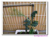 090222 我的黃金鼠&菜園:090222 Beitao03.jpg