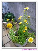 090222 我的黃金鼠&菜園:090222 Beitao04.jpg