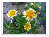 090222 我的黃金鼠&菜園:090222 Beitao06.jpg