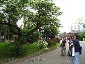 台大散步:090319NTU13.JPG