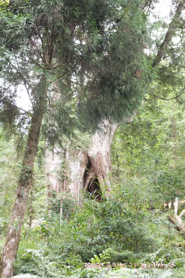 棲蘭山神木之旅&宜蘭饗宴:110905-121.JPG