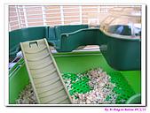 090222 我的黃金鼠&菜園:090222 Bobo02.jpg