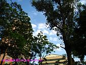 090315 台灣大學杜鵑花節:090314 NTU05.JPG