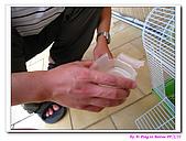 090222 我的黃金鼠&菜園:090222 Bobo06.jpg