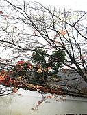 嵯峨嵐山 天龍寺,竹林,渡月橋-金閣寺-祇園(09京阪3):091205-020.JPG