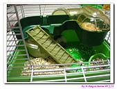 090222 我的黃金鼠&菜園:090222 Bobo12.jpg
