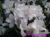 090315 台灣大學杜鵑花節:090314 NTU20.JPG