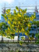 新竹2日遊:110619-116.JPG