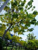 新竹2日遊:110619-120.JPG