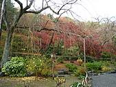 嵯峨嵐山 天龍寺,竹林,渡月橋-金閣寺-祇園(09京阪3):091205-186.JPG