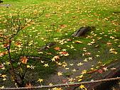 嵯峨嵐山 天龍寺,竹林,渡月橋-金閣寺-祇園(09京阪3):091205-287.JPG