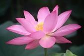 2017年台北植物園荷花池:IMG_0354.JPG