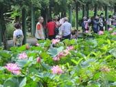 2017年台北植物園荷花池:IMG_5312.JPG