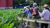 2017年台北植物園荷花池:DSC02776.JPG
