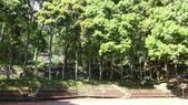 八仙山國家森林遊樂區:DSC00322.JPG