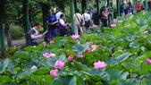 2017年台北植物園荷花池:DSC02773.JPG