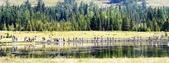 喀納斯湖:DSC00568 (2).JPG