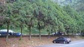 八仙山國家森林遊樂區:DSC00228.JPG