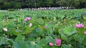 2017年台北植物園荷花池:DSC02753.JPG