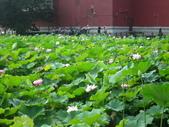 2017年台北植物園荷花池:IMG_5319.JPG