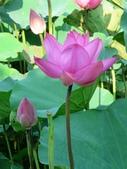 2017年台北植物園荷花池:IMG_5296.JPG
