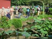 2017年台北植物園荷花池:IMG_5308.JPG