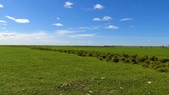 額爾古納溼地:DSC05101.JPG