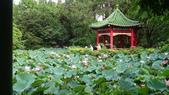 2017年台北植物園荷花池:DSC02854.JPG