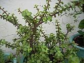 我的天空花園:空中小花園18.jpg