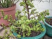 我的天空花園:我的小空中花園1.jpg