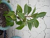 我的天空花園:長在牆上的樹.jpg