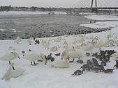 98年北海道之旅:CIMG4956.JPG