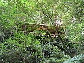 北橫 巴陵 拉拉山 明池:69