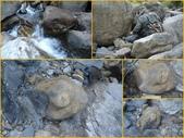 龜甲山林:龜甲石