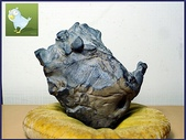 龜甲山林:龜甲石.jpg