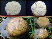 龜甲山林:白龜甲石