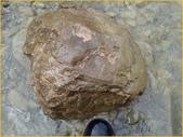龜甲山林:龜甲石2.jpg