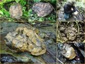 龜甲山林:龜甲石4.jpg