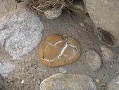 龜甲山林:DSC00363.JPG