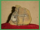 龜甲山林:雅石4.jpg