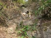 龜甲山林:202056_210209_2.jpg