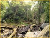 龜甲山林:06126.jpg