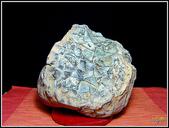 龜甲山林:水里龜甲石