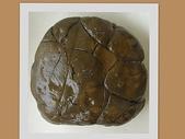龜甲山林:竹坑溪黑龜甲2.jpg