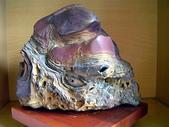 龜甲山林:DSC00183.JPG