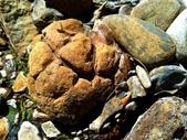 龜甲山林:003