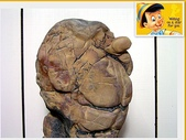 龜甲山林:龜甲石1.jpg