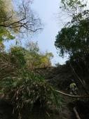 龜甲山林:202056_210209.jpg