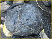 龜甲山林:黑膽石